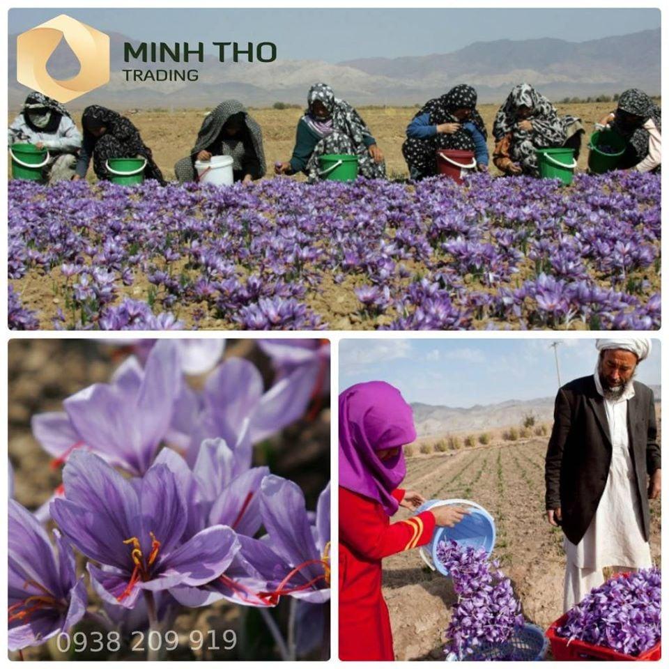 Nhụy hoa nghệ tây Tashrifat Premium Negin Saffron Iran